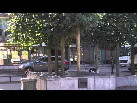 chat plongé - 2 poses - presse