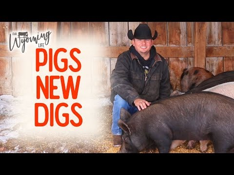 Building the Pigs a Place in the Barn – Project List