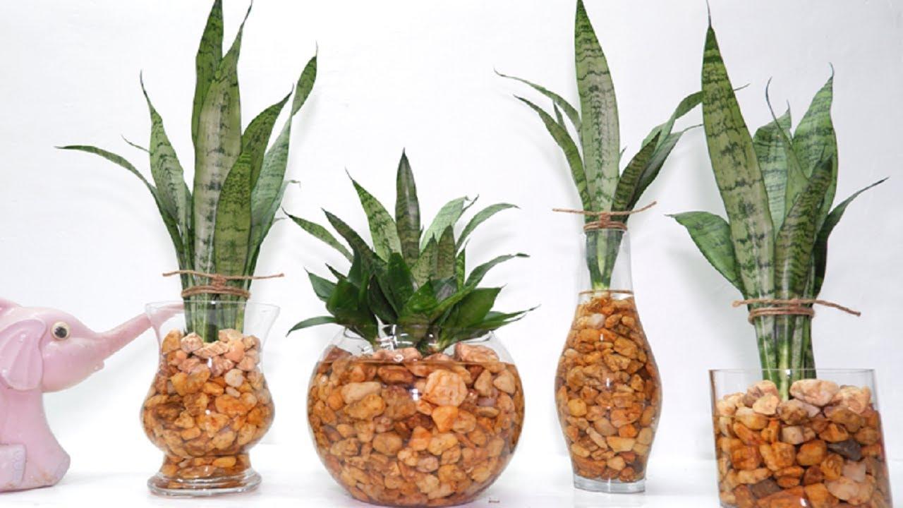Easy Summer Arrangement Idea of Snake Plant Zeylanica in Glass Vase for Home Decor