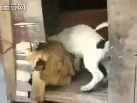 Wölfe Trio ficken Kaninchen Huhn hund katze lustige
