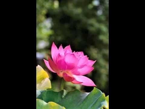 Guided Meditation on Loving Kindness - Metta Bhavana