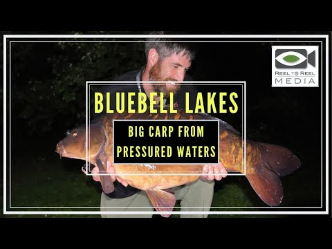 Carp Fishing 2019 ~ Bluebell Lakes, How To Approach Busy Day Ticket Lakes ~ The Road Trip (part 4)