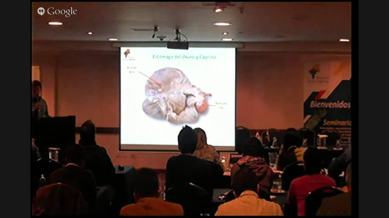 Anatomía digestiva de ovejas y cabras, Trópico Alto. - YouTube