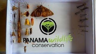 NHM Expedition Santa Fe National Park PANAMA