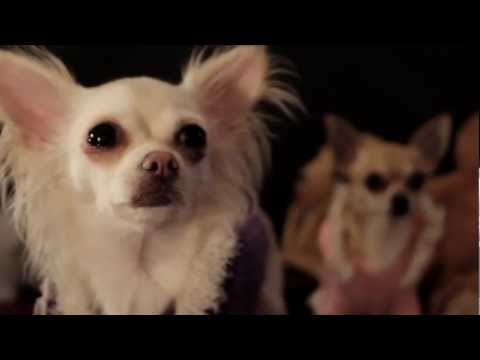 Chihuahua Party - Official Music Video - by Swede 2013