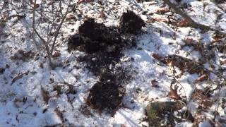 Tracking Black Bear in PA