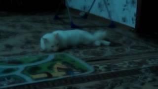 Кот который непонятно лежит и по каким то причинам поворачивает голову назад