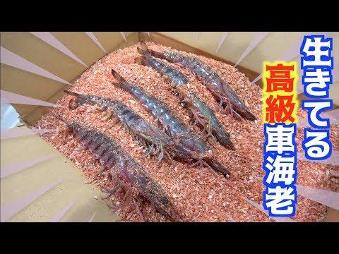 釣った食材とお歳暮で頂いた高級食材2種を使ってちゃんこ鍋!