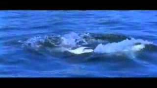 Free Willy music by Michael jackson official video