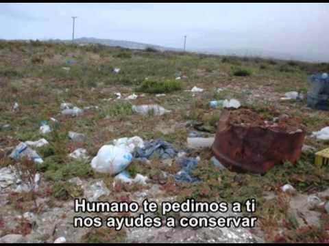 """Karaoke """"La Comunidad del Humedal"""""""