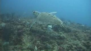 Turtle on Juno 1/23/10-YouTube Thumbnail