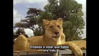 Born Free (1966). Trailer. Subtitulado al español..avi