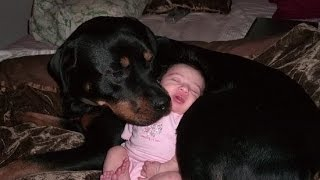 Rottweiler Dogs And Babies Kissing And Playing Happy Together Compilation   Dog Loves Baby videos