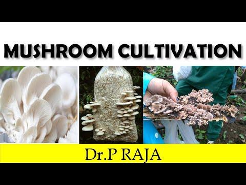 paddy straw mushroom cultivation pdf