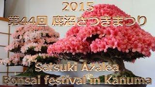 """2015 鹿沼さつき祭り 44nd Kanuma Satsuki Azalea Bonsai Festival""""Prime Minister's Award""""内閣総理大臣賞「盆栽」 thumbnail"""