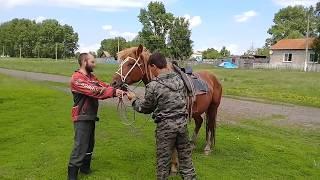Обучение лошади.