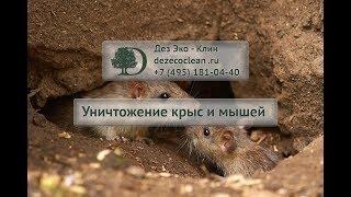 Уничтожение крыс и мышей, дератизация грызунов(, 2012-12-01T21:04:15.000Z)