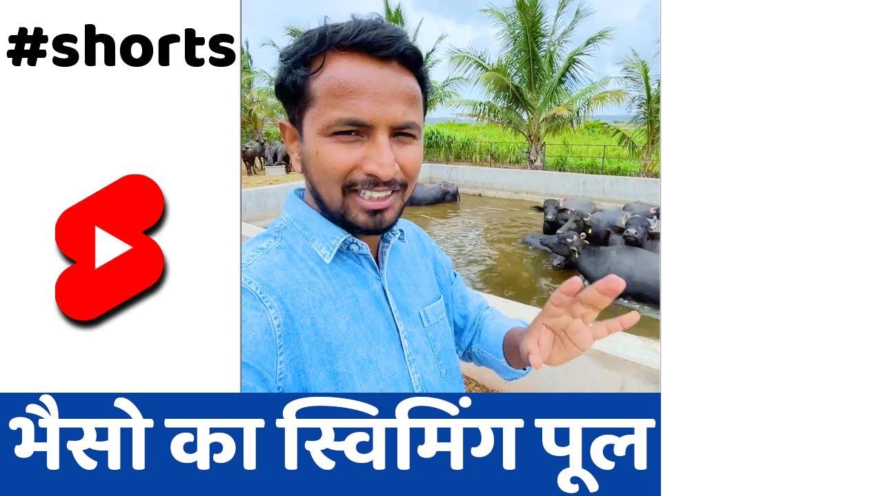 Murrah Animals in Swimming Pool #SHORTS #INDIANFARMER #KISAN