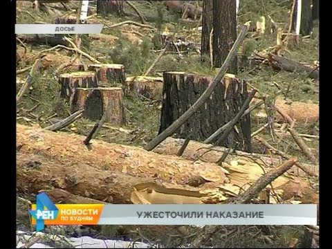 """""""Чёрным лесорубам"""", которые нанесли ущерб лесному фонду на 13 млн руб., ужесточили наказание"""
