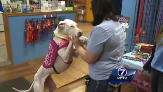 Trained through touch, 2 blind and deaf dogs up for adoption