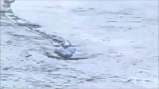 「アイスランドのネッシー」映像は本物?第三者委員会が認める ネッシー 検索動画 20