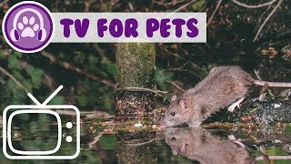 TV for Pets! Therapy TV Calming, Relaxing Footage to Entertain your Pet!