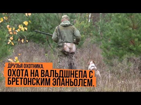 Друзья охотника. Охота на вальдшнепа с бретонским эпаньолем.