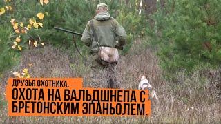 Охота на вальдшнепа с бретонским эпаньолем видео