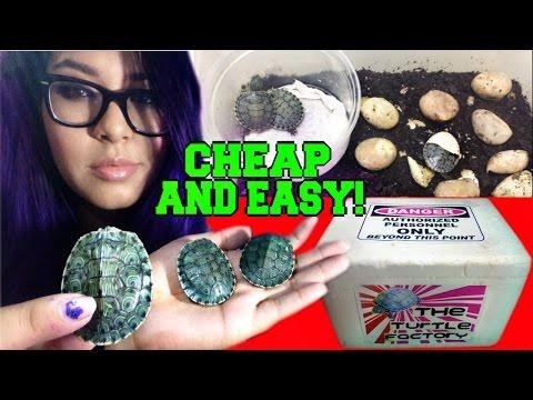 DIY homemade turtle egg incubator (that works)