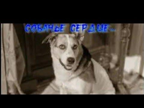 Общение с астралом собаки#диагностика#Центр гипноза и энергоинформационных технологий#Центр развития