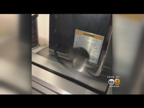 Health Department Searching For Alleged Rat That Invaded Popular Burger Chain