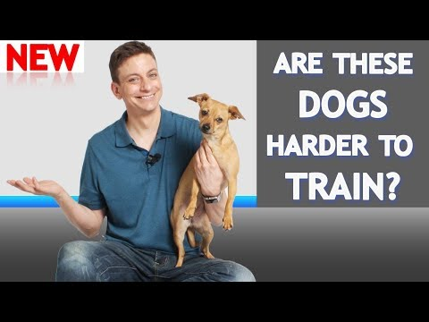 What's Different About Training Dogs Like This?