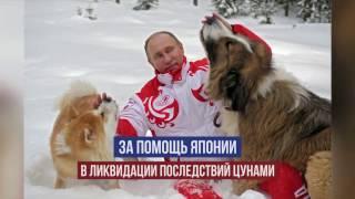 Япония подарит Путину еще одну собаку