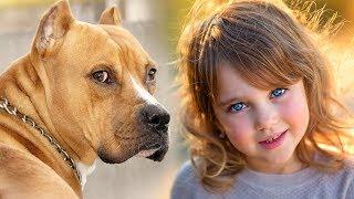 Пёс оказался на улице, как и многие другие собаки. Его просто выбросили. Но однажды утром он увидел.