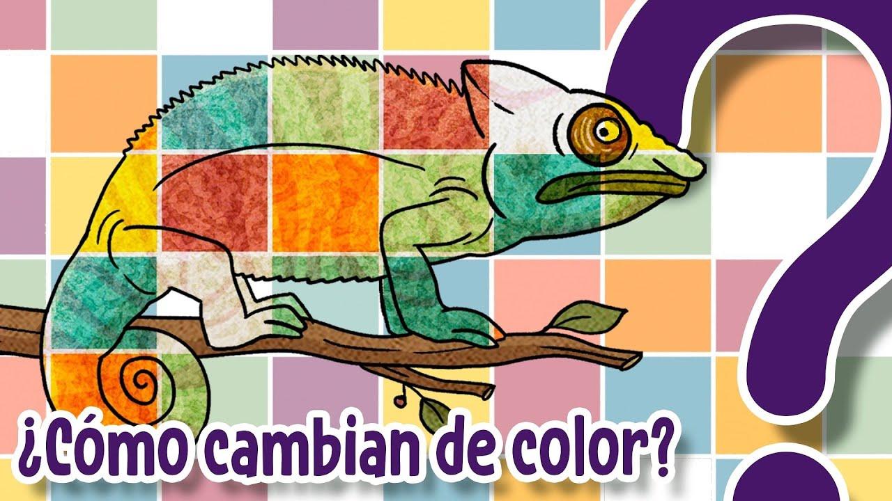 ¿Cómo cambian de color los animales que cambian de color? - CuriosaMente 236