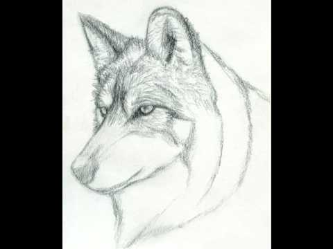 How to draw a realistic wolf step by step youtube