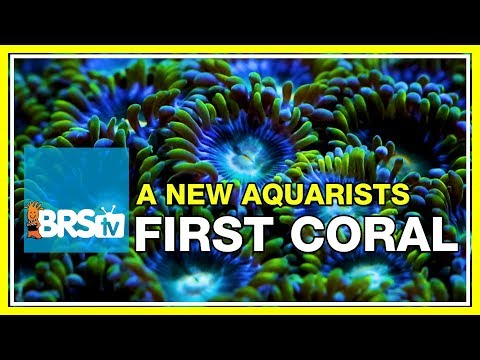 FAQ #7: What would be the first coral we'd recommend for an aquarium hobbyist? | 52 FAQ