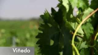 20 hectáreas de viñedo: Barcolobo - Todovino.com
