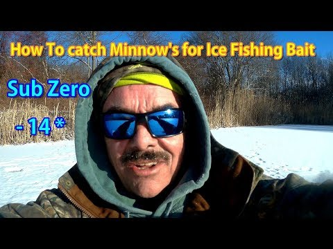 How To Catch (trap) Minnows (shiners)  As Bait Fish For Ice Fishing!