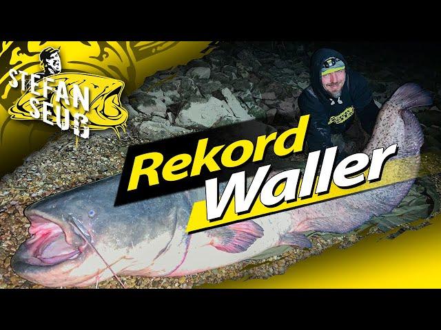 XXL MONSTER WALLER aus Deutschland | Welsangeln am Fluss | Angeln mit Köderfisch und Tauwurm