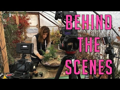 Nativity Fairy Garden – Behind the Scenes
