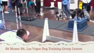 Sit Means Sit, Las Vegas Dog Training Group Lesson