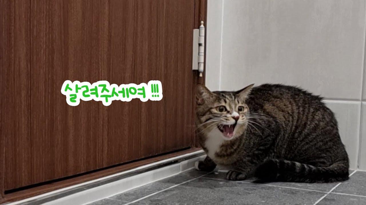 [FourCat냥] (ENG) 말 잘 듣는 착한 고양이 목욕도 잘할까요?