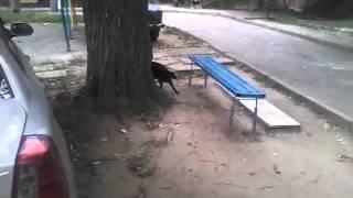 Чернобурка (спасенная собака)