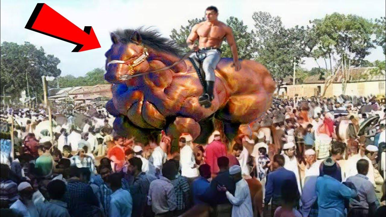 देखिए ये है दुनिया का सबसे बड़ा ओर तगड़ा बॉडीबिल्डर घोड़ा || Horse Technology Machine