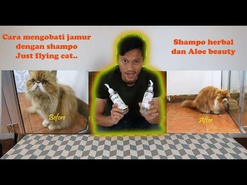 Shampo Recomended Untuk Jamur Dan Memperpanjang Pertumbuhan Bulu Kucing