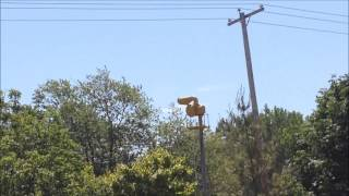 Tornado siren in Georgetown Township, MI (monthly test)