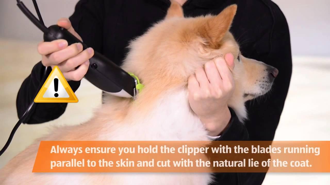 Pet Grooming Kit Youtube