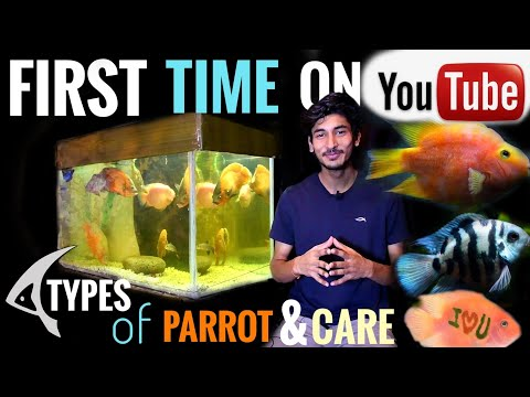 Different Types Of Parrot Fish And There Care | In Hindi