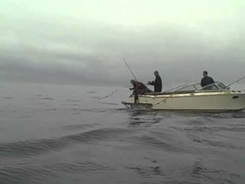 Tuna fishing gold beach oregon youtube for Seaside oregon fishing